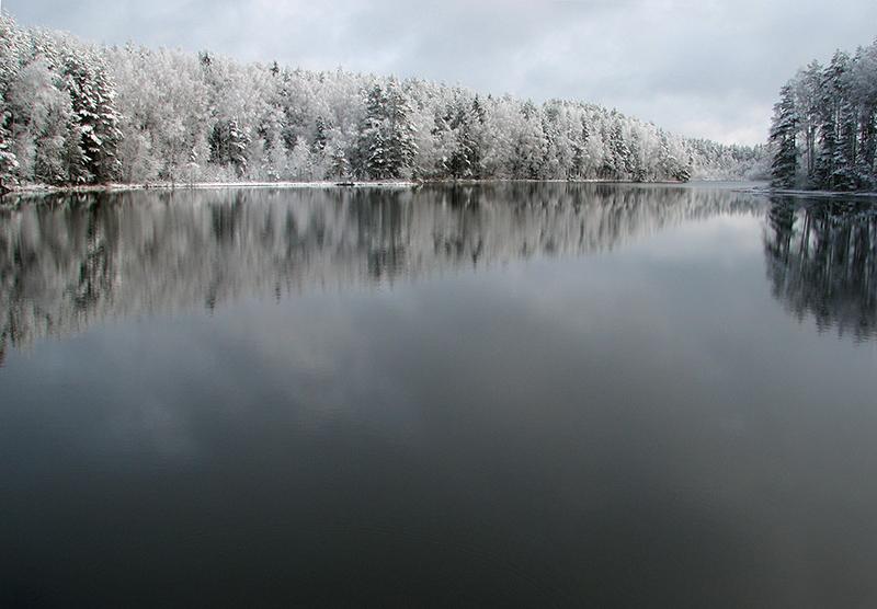 Žiema girioje