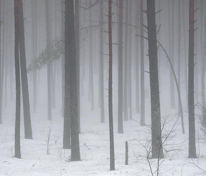 Sniegas nubalino Girią